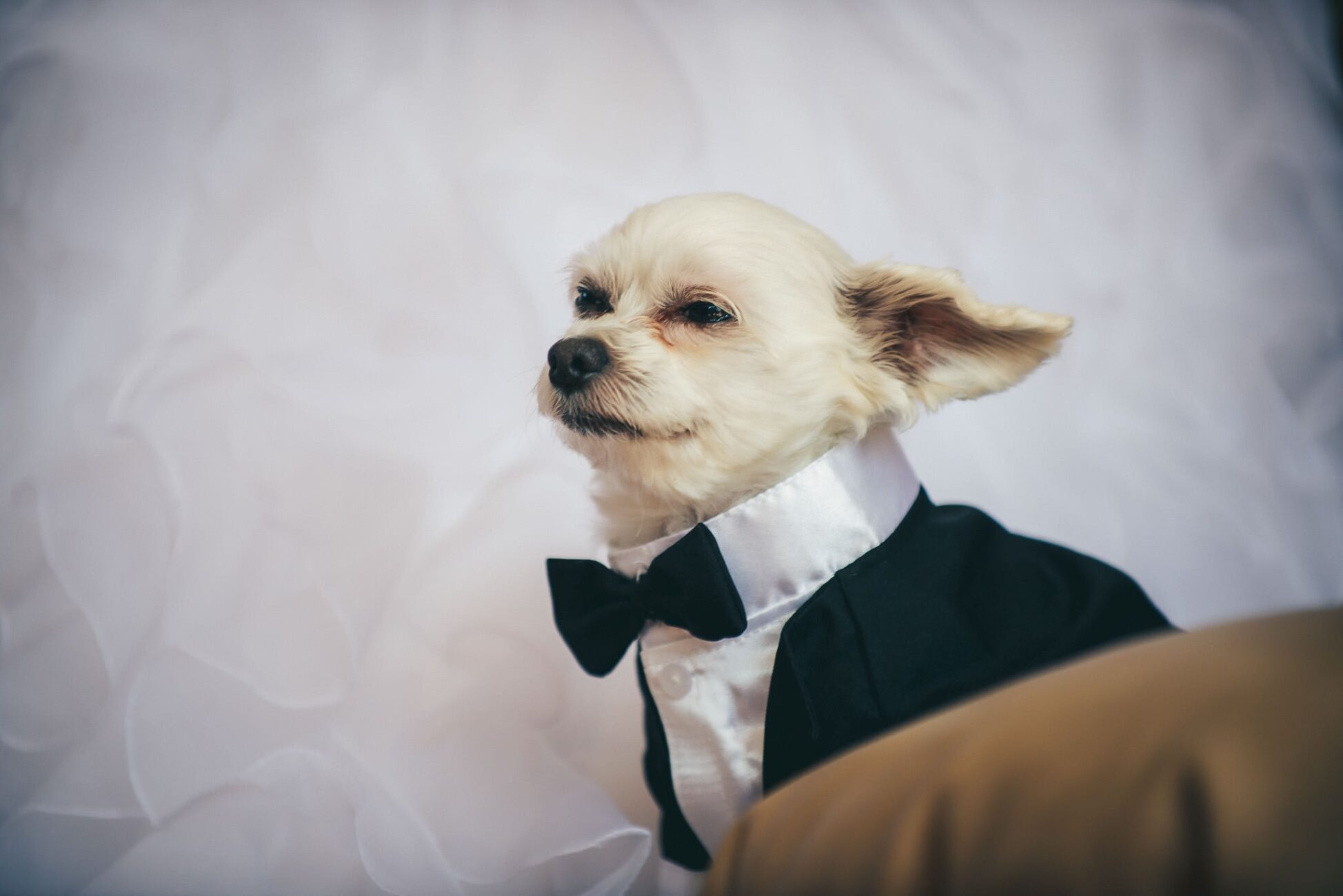 Furry Friends that make celebrations extra special